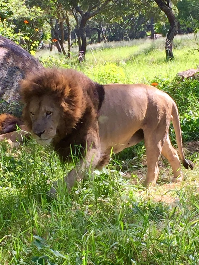 Weekend trip for an African Safari 1