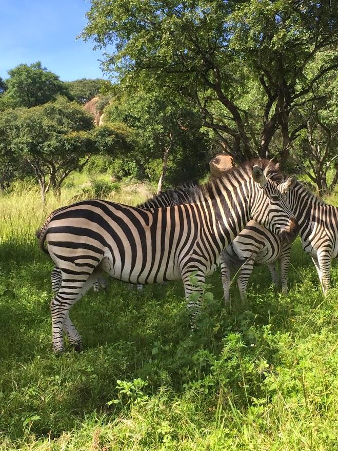 Weekend trip for an African Safari 3