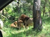Weekend trip for an African Safari 2